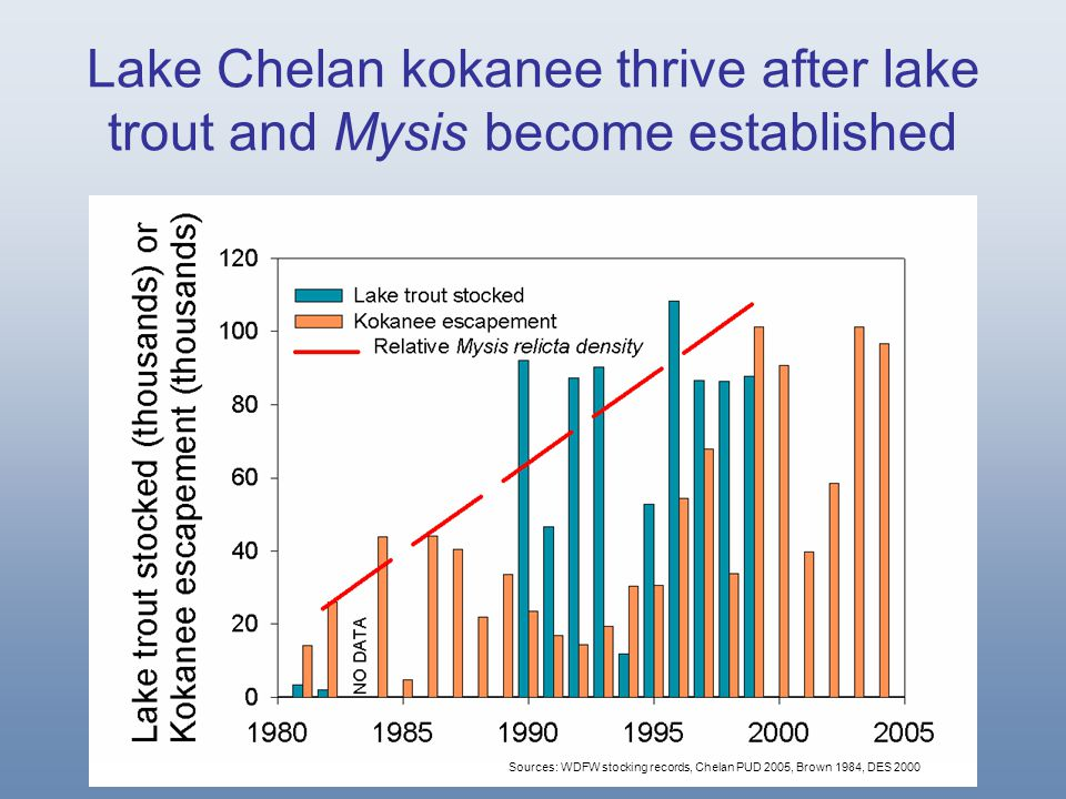 Lake Chelan kokanee thrive after lake trout and Mysis become established Sources: WDFW stocking records, Chelan PUD 2005, Brown 1984, DES 2000