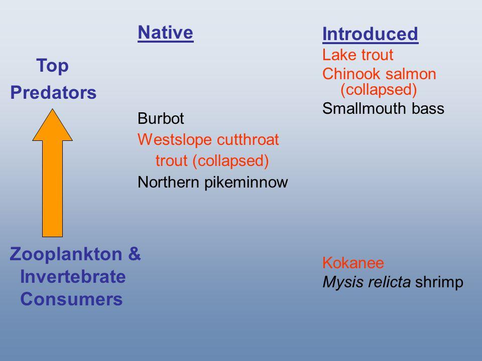 Rapid kokanee collapses –Flathead Lake, MT –Priest Lake, ID –Whitefish Lake, MT Intensive lake trout suppression efforts –Yellowstone Lake, WY –Lake Pend Oreille, ID –Swan Lake, MT Spencer et al.