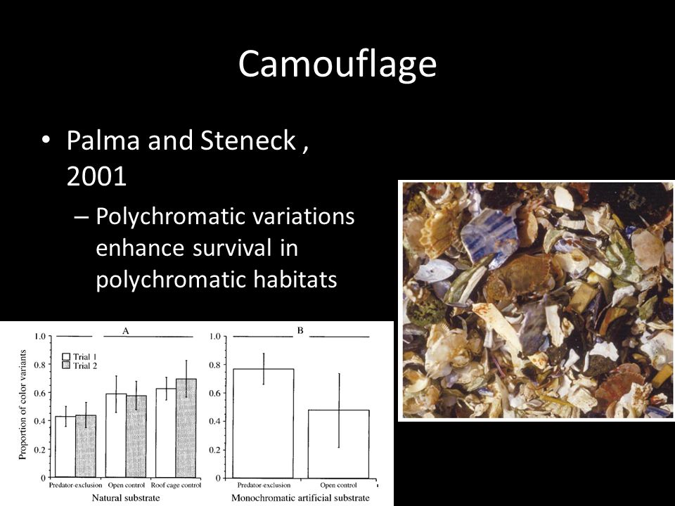 Camouflage Palma and Steneck, 2001 – Polychromatic variations enhance survival in polychromatic habitats