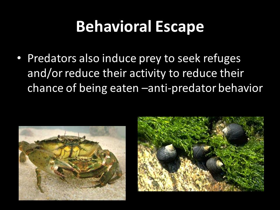 Predators also induce prey to seek refuges and/or reduce their activity to reduce their chance of being eaten –anti-predator behavior