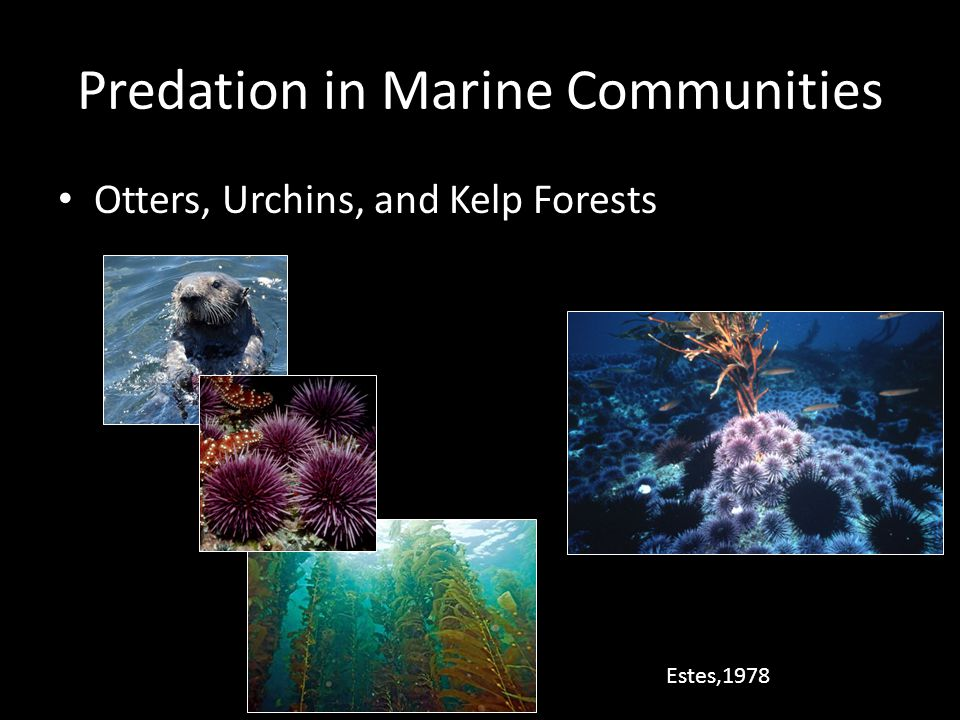 Otters, Urchins, and Kelp Forests Estes,1978 Predation in Marine Communities