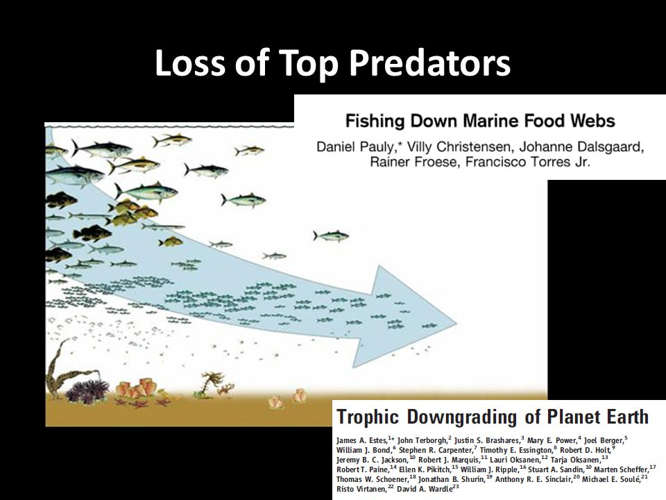 Loss of Top Predators