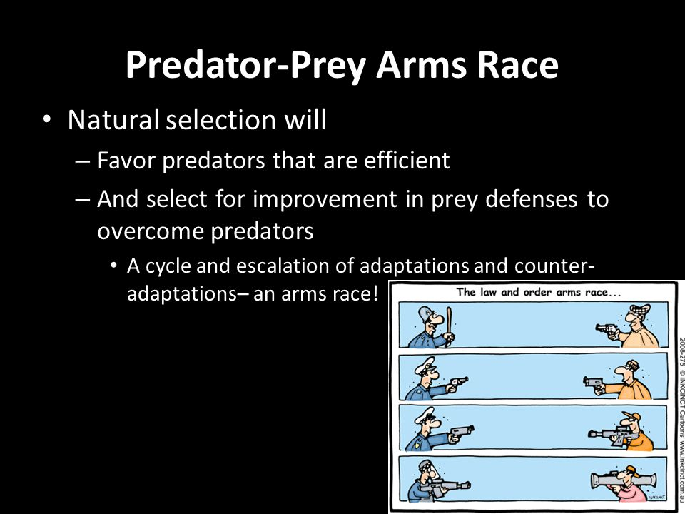 Predator-Prey Arms Race Natural selection will – Favor predators that are efficient – And select for improvement in prey defenses to overcome predators A cycle and escalation of adaptations and counter- adaptations– an arms race!