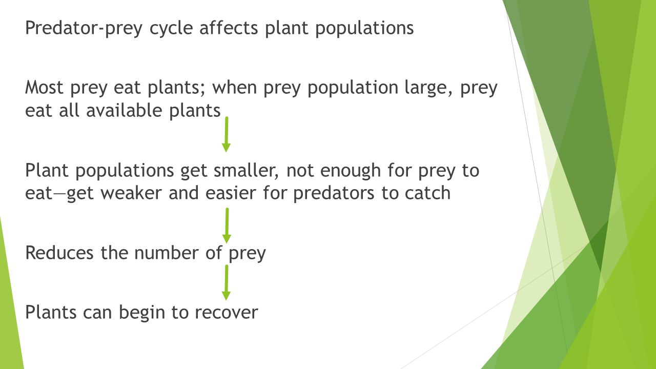 Predator-prey cycle affects plant populations Most prey eat plants; when prey population large, prey eat all available plants Plant populations get smaller, not enough for prey to eat—get weaker and easier for predators to catch Reduces the number of prey Plants can begin to recover