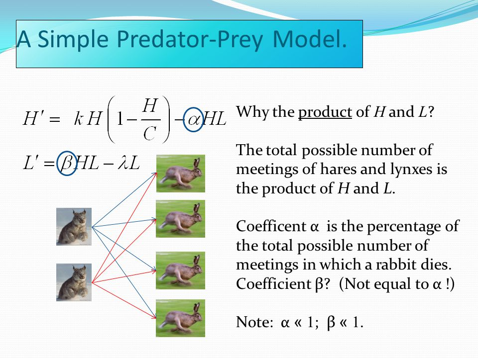 A Simple Predator-Prey Model. Why the product of H and L .