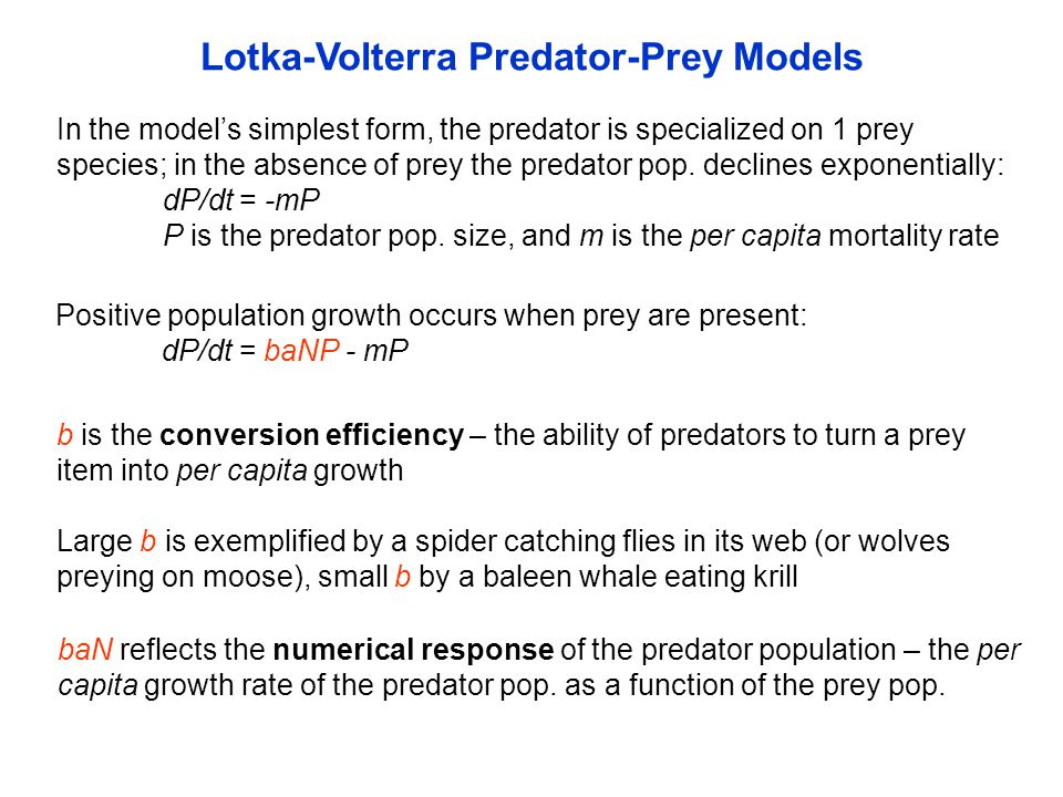 In the model's simplest form, the predator is specialized on 1 prey species; in the absence of prey the predator pop. declines exponentially: dP/dt =