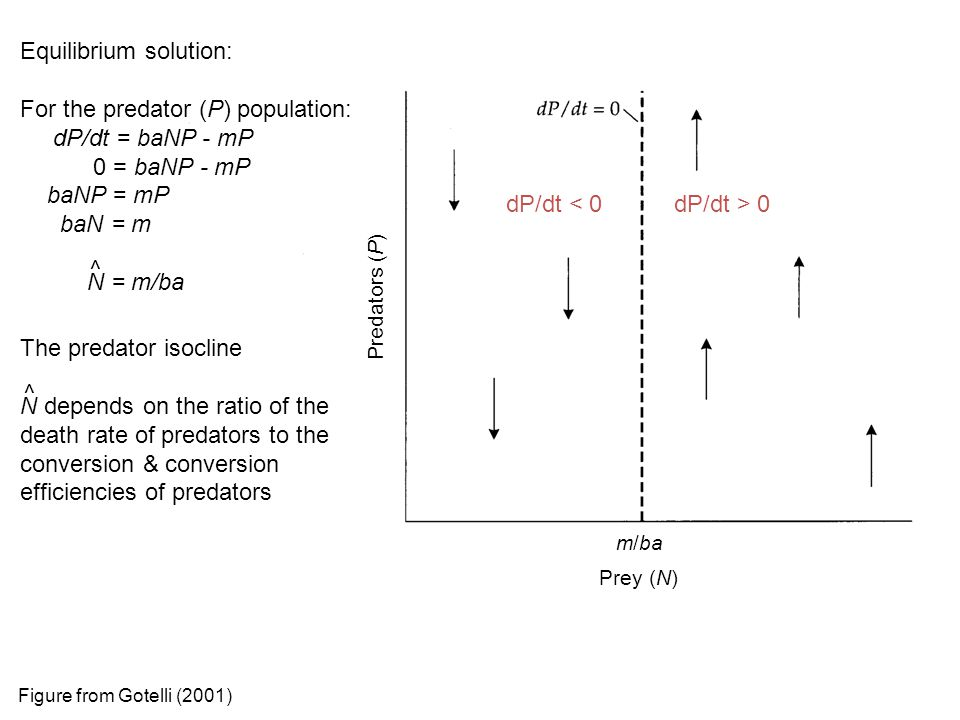 The predator isocline N depends on the ratio of the death rate of predators to the conversion & conversion efficiencies of predators Equilibrium solut