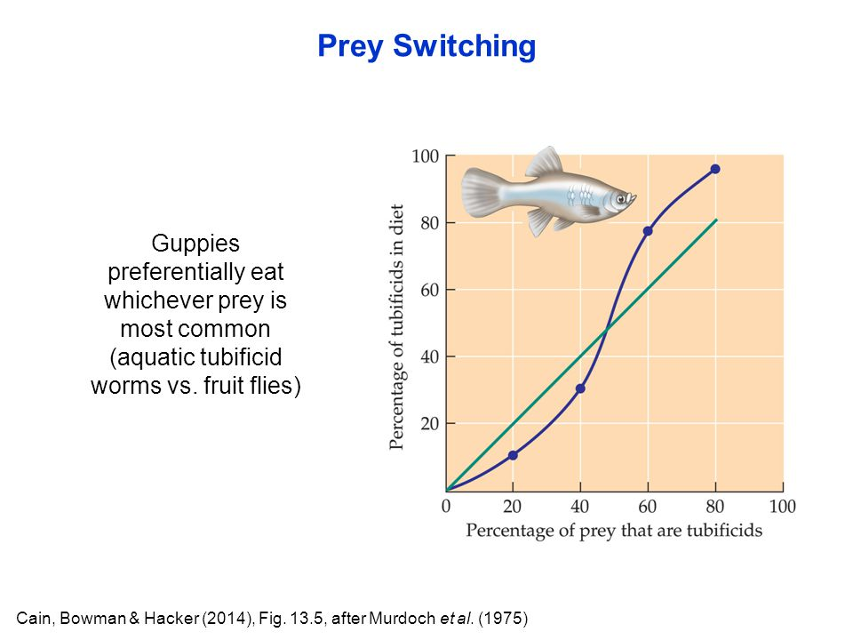 Prey Switching Cain, Bowman & Hacker (2014), Fig. 13.5, after Murdoch et al. (1975) Guppies preferentially eat whichever prey is most common (aquatic