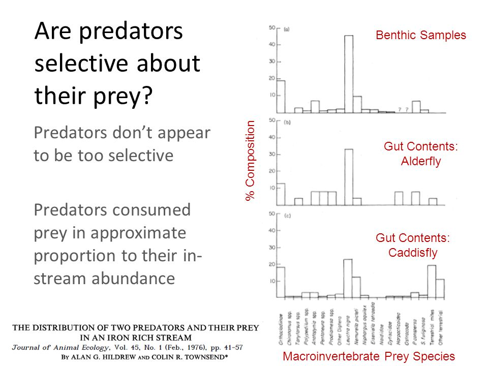 Are predators selective about their prey.