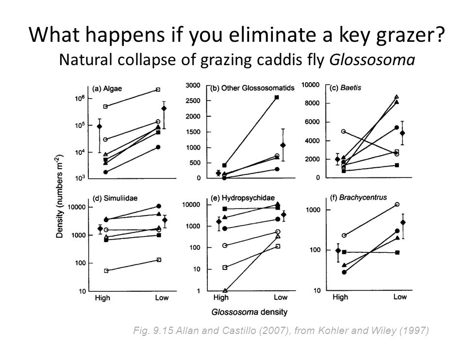 What happens if you eliminate a key grazer. Natural collapse of grazing caddis fly Glossosoma Fig.
