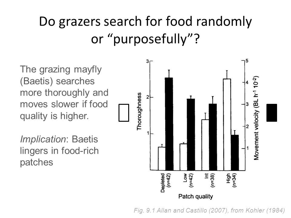 Do grazers search for food randomly or purposefully .