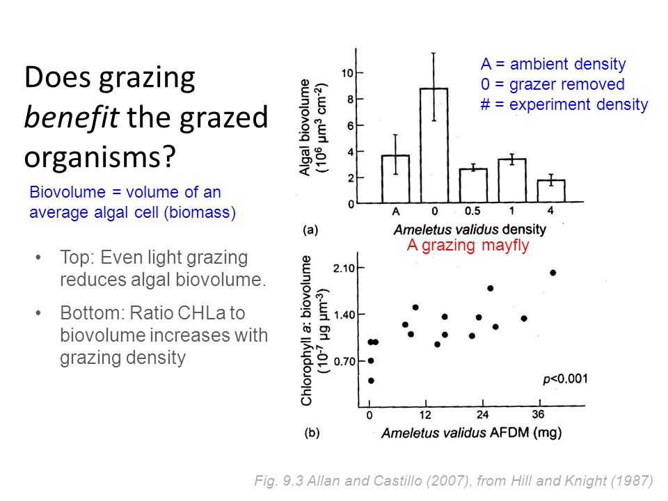 Does grazing benefit the grazed organisms. Fig.