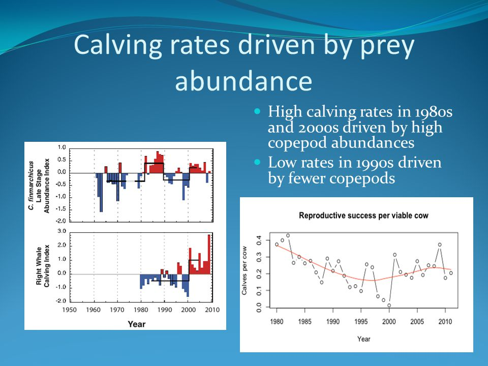 3-Stage Reproduction Model A calving cycle takes at least 3 years: 1 year in each stage 2 Probabilities must be computed: 1.