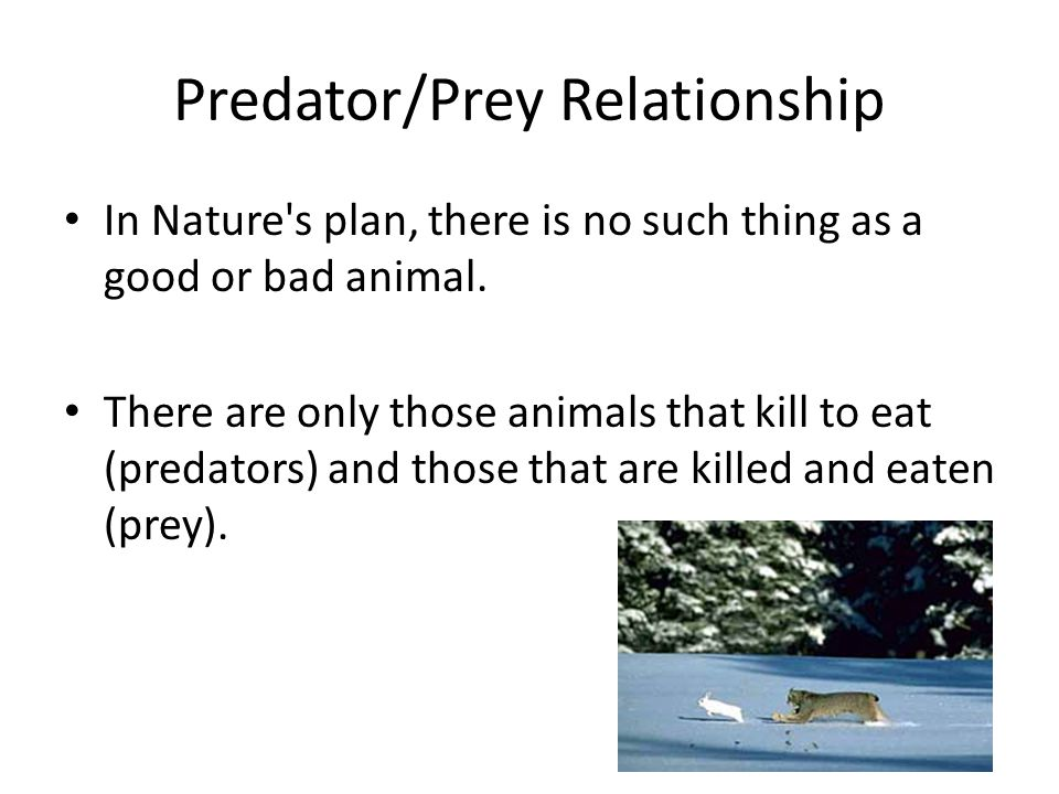 Predator/Prey Relationship In Nature s plan, there is no such thing as a good or bad animal.