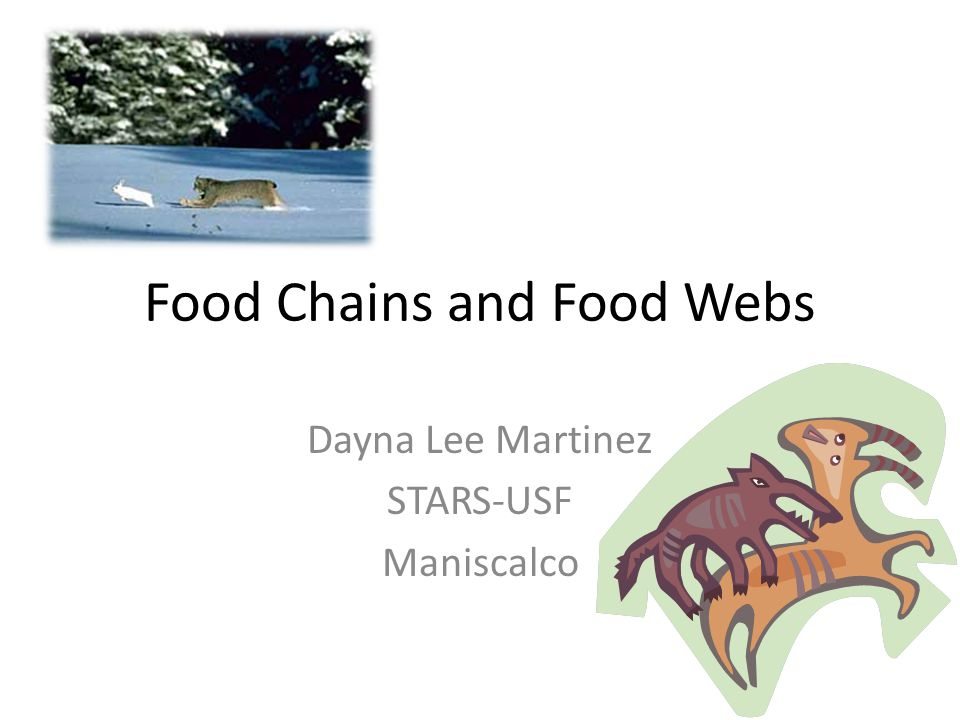 Food Chains and Food Webs Dayna Lee Martinez STARS-USF Maniscalco