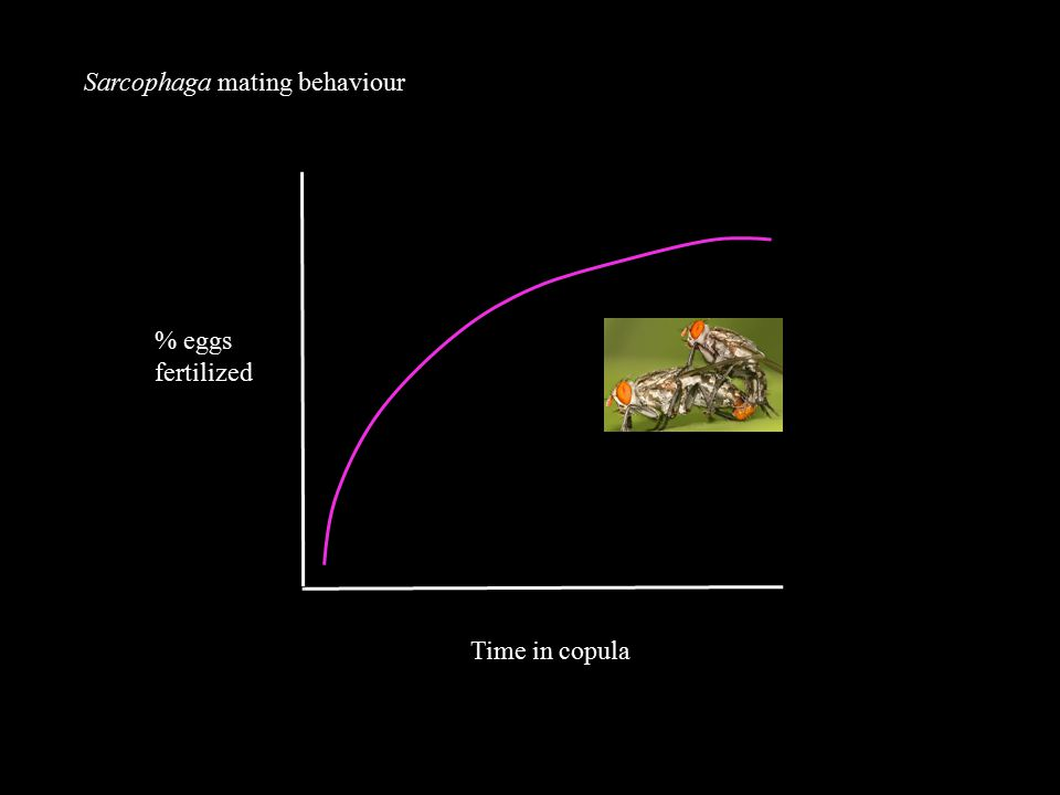 Sarcophaga mating behaviour % eggs fertilized Time in copula