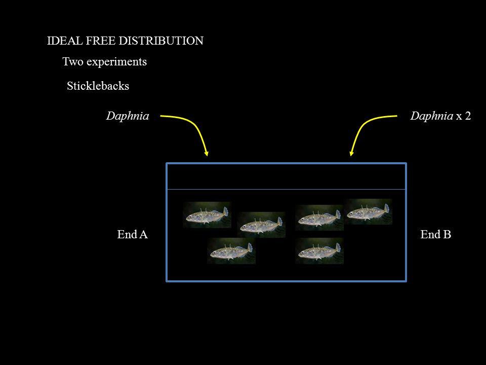 IDEAL FREE DISTRIBUTION Two experiments Sticklebacks DaphniaDaphnia x 2 End AEnd B