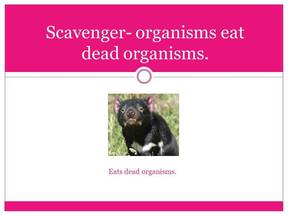 Scavenger- organisms eat dead organisms. Eats dead organisms.