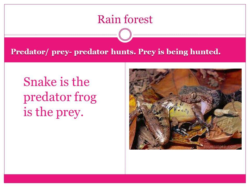 Scavenger- organisms that eat dead organsms. Dung beetle is eating a dead millipede.