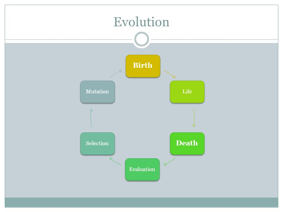 Evolution Birth Life Death EvaluationSelectionMutation