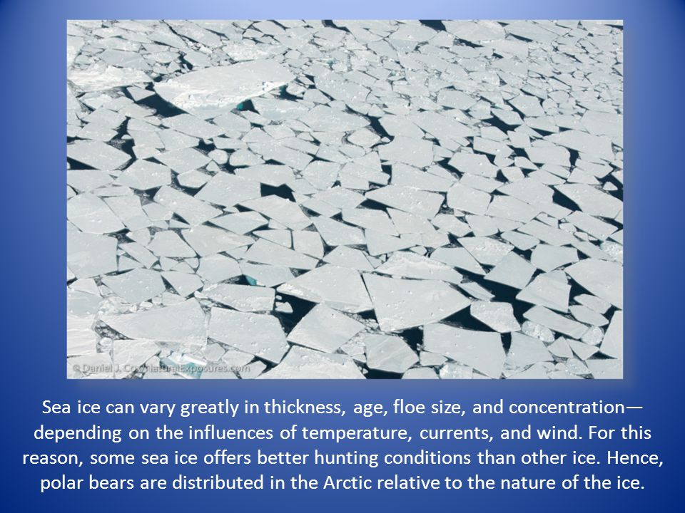 Sea ice can vary greatly in thickness, age, floe size, and concentration— depending on the influences of temperature, currents, and wind. For this rea