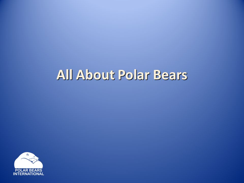 The polar bear is the youngest of the eight bear species.