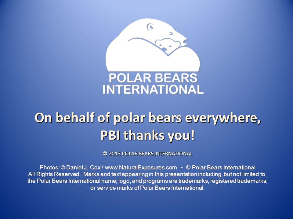 On behalf of polar bears everywhere, PBI thanks you! © 2013 POLAR BEARS INTERNATIONAL Photos: © Daniel J. Cox / www.NaturalExposures.com © Polar Bears