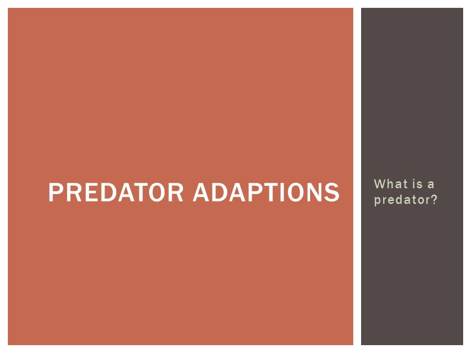What is a predator PREDATOR ADAPTIONS