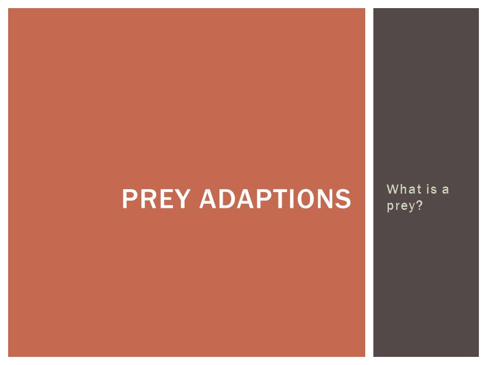 What is a prey PREY ADAPTIONS