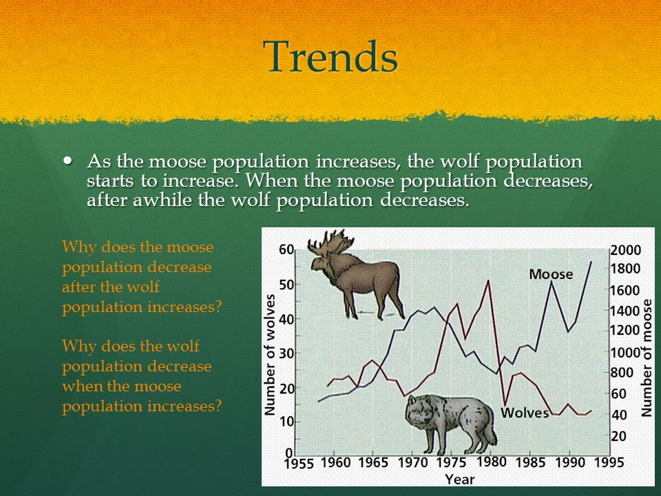 Trends As the moose population increases, the wolf population starts to increase.