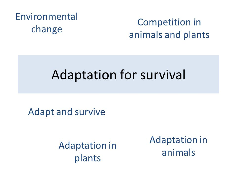 Adaptation for survival Adapt and survive Adaptation in animals Adaptation in plants Competition in animals and plants Environmental change