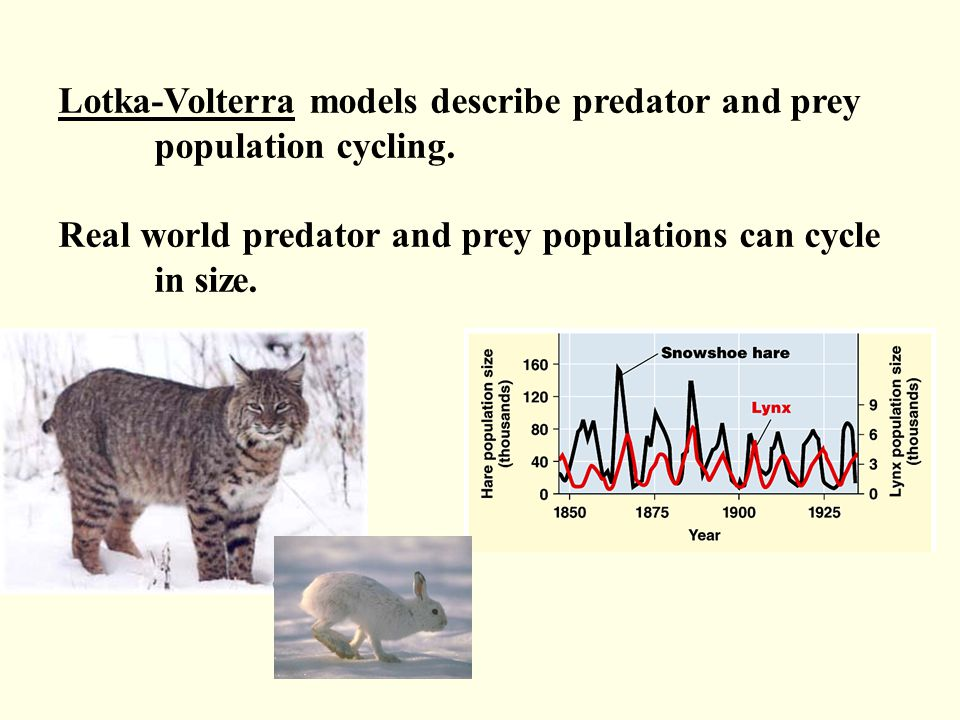 Lotka-Volterra models describe predator and prey population cycling. Real world predator and prey populations can cycle in size.
