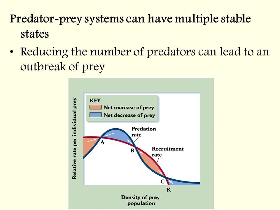 Predator-prey systems can have multiple stable states Reducing the number of predators can lead to an outbreak of prey