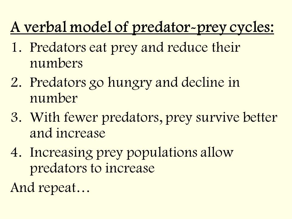 A verbal model of predator-prey cycles: 1.Predators eat prey and reduce their numbers 2.Predators go hungry and decline in number 3.With fewer predators, prey survive better and increase 4.Increasing prey populations allow predators to increase And repeat…