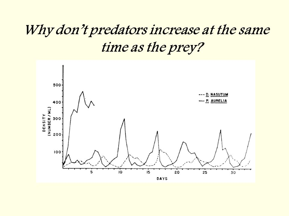 Why don't predators increase at the same time as the prey?