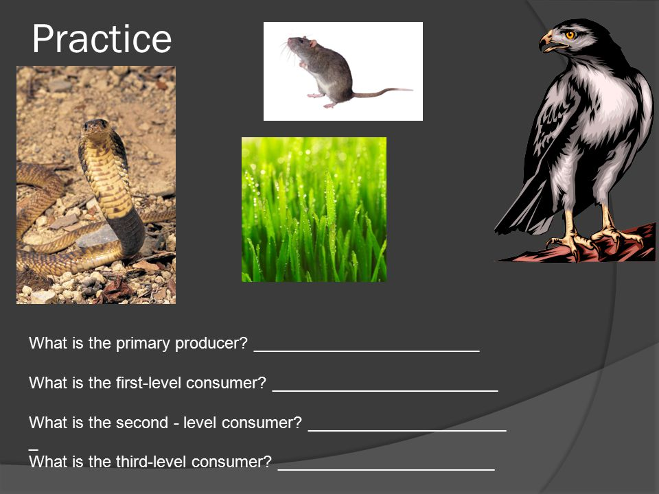 Practice What is the primary producer. _________________________ What is the first-level consumer.