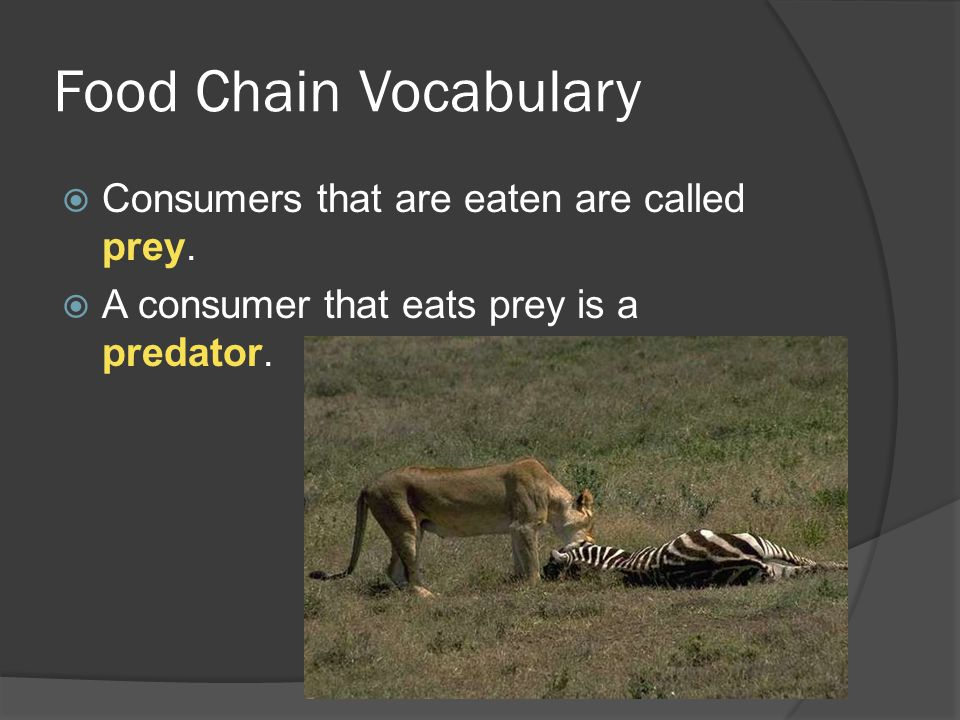 Food Chain Vocabulary  Consumers that are eaten are called prey.