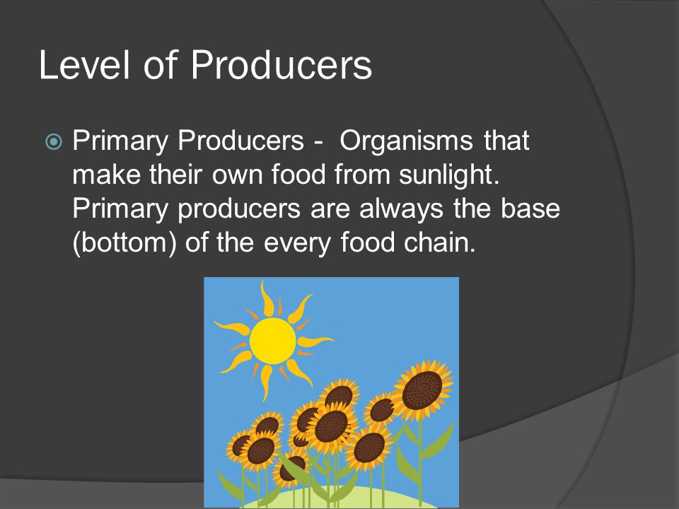 Level of Producers  Primary Producers - Organisms that make their own food from sunlight.