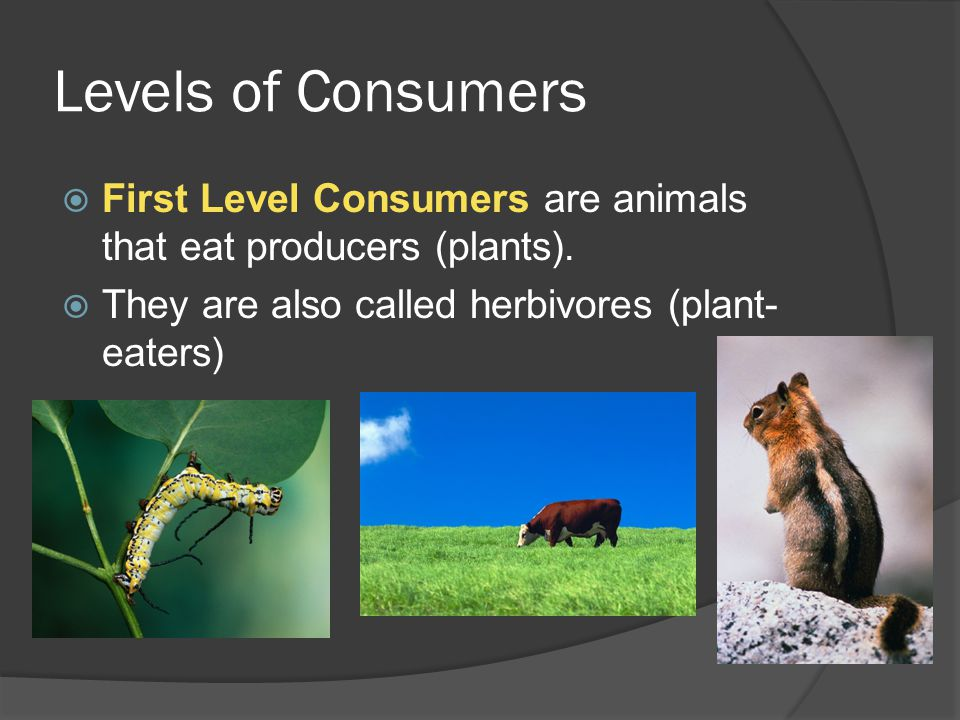 Levels of Consumers  First Level Consumers are animals that eat producers (plants).