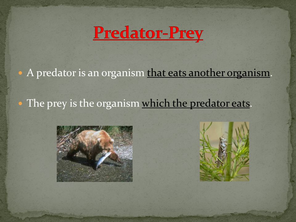 A predator is an organism that eats another organism.
