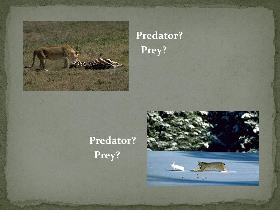 Predator? Prey? Predator? Prey?