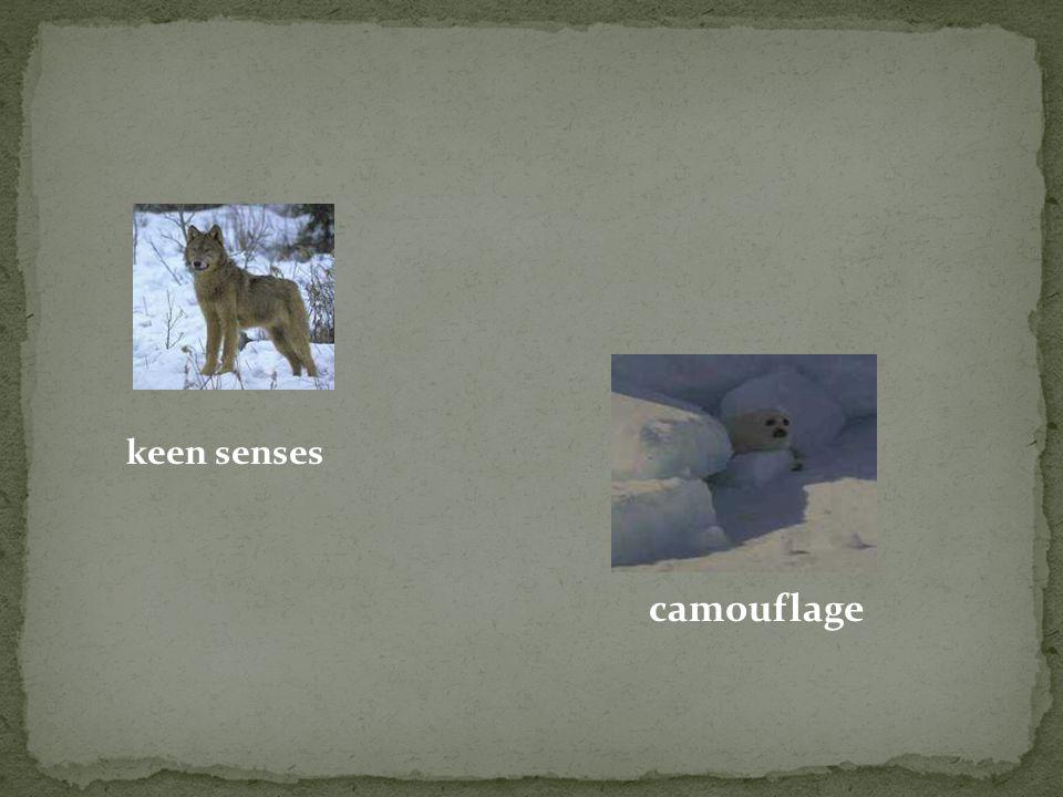 keen senses camouflage
