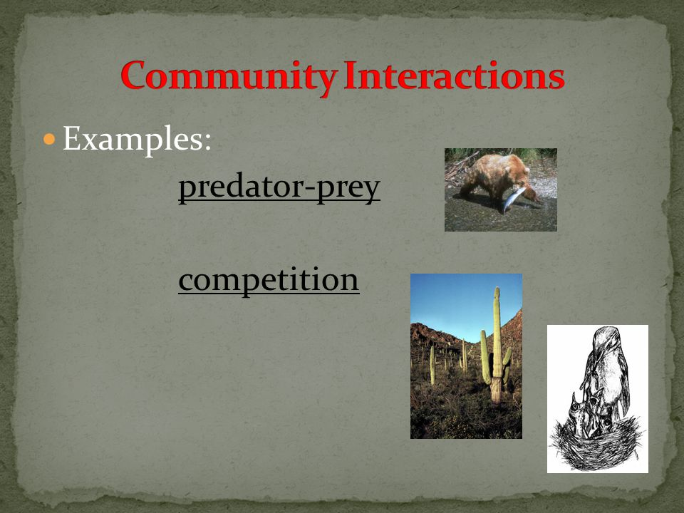 Examples: predator-prey competition