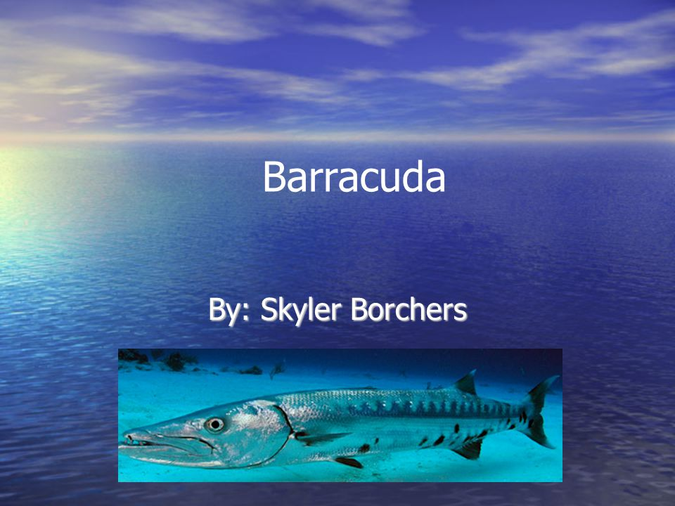 Barracuda By: Skyler Borchers