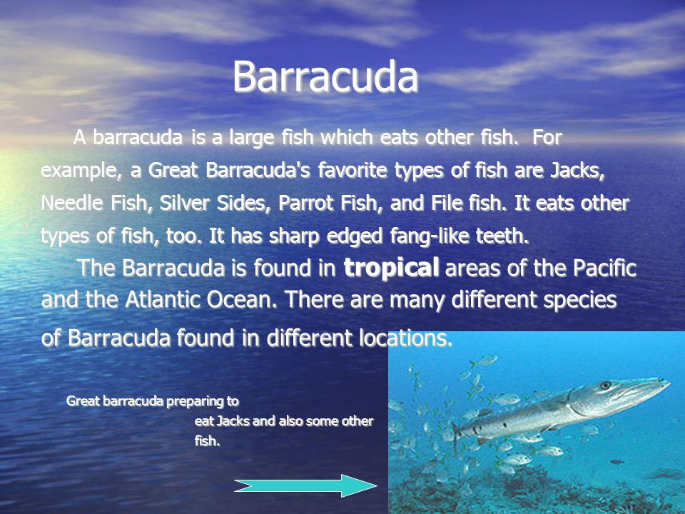 Barracuda Barracuda A barracuda is a large fish which eats other fish.