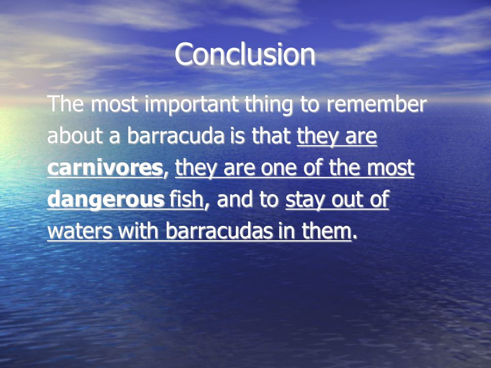 Conclusion The most important thing to remember about a barracuda is that they are carnivores, they are one of the most dangerous fish, and to stay out of waters with barracudas in them.