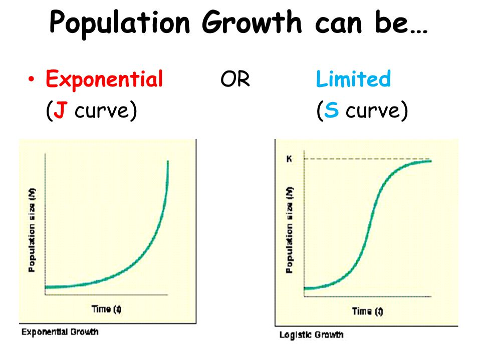 STAGES OF POPULATION GROWTH 1) Lag Phase2) Log Phase 3) Stationary Phase 4) Decline/Death Phase