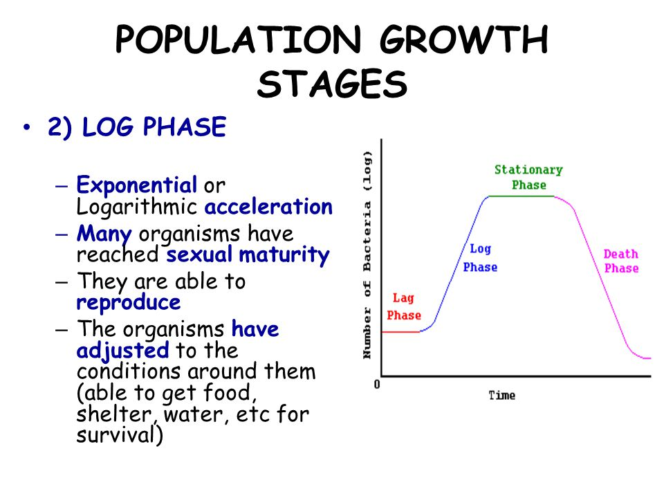 POPULATION GROWTH STAGES 3) STATIONARY PHASE – Growth ceases (slows down) and population remains relatively fixed in size – The carrying capacity is reached – The number of births and deaths balance each other out – The immigration and emigration rate are roughly the same
