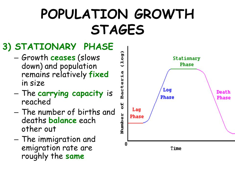 POPULATION GROWTH STAGES 3) STATIONARY PHASE – Growth ceases (slows down) and population remains relatively fixed in size – The carrying capacity is r