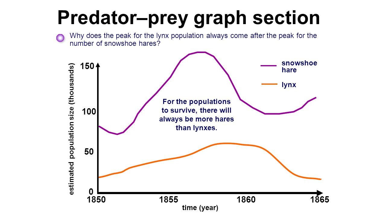 Predator–prey graph section Why does the peak for the lynx population always come after the peak for the number of snowshoe hares? 0 50 estimated popu